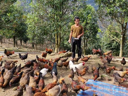 郭拾嘎:生态养鸡巧致富