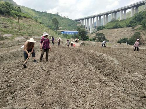建水县坡头乡:村干部引领群众种植玉米促增收