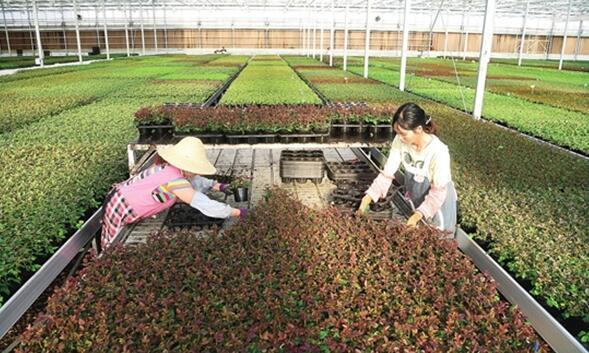 云南将打造万亿级高原特色现代农